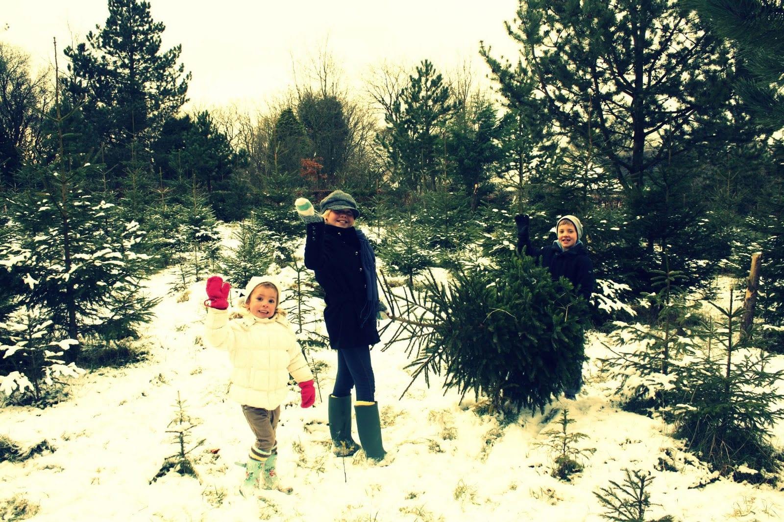 Christmas-Tree-Hunting
